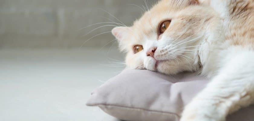 Kediler neden mutsuz olur