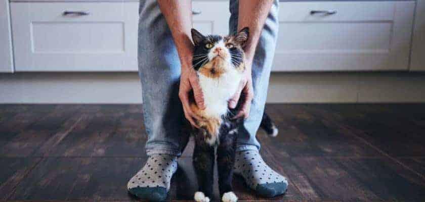 Kedilerde Davranış Değişiklikleri