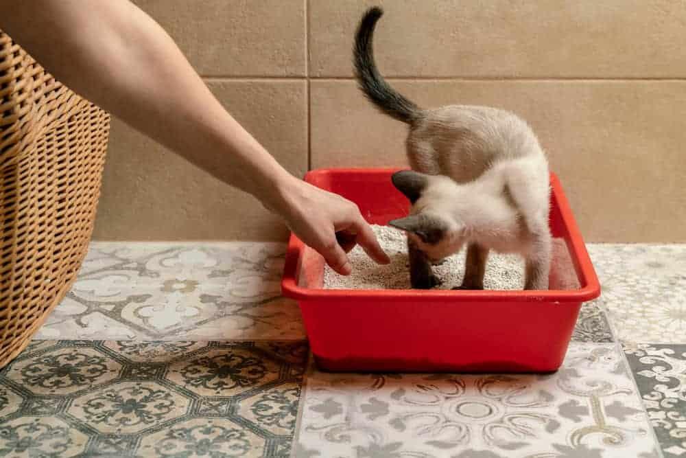 Kedilere Tuvalet Kabı Eğitimi