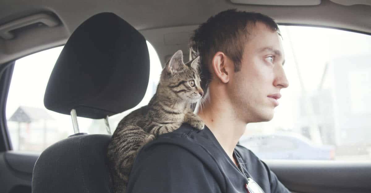 Kedilerin araba korkusu