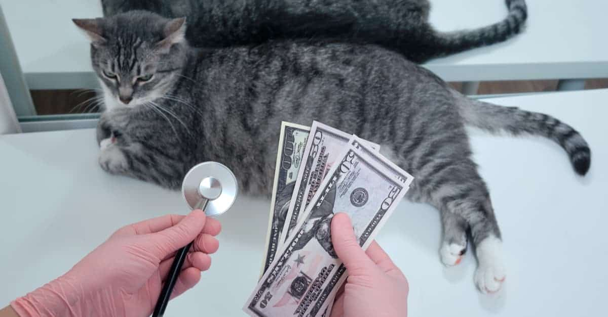 kedilerin temel ihtiyaçları