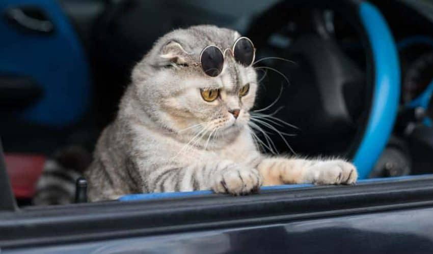 Kedilerle araba yolculuğu: Korkuyu azaltacak 8 ipucu