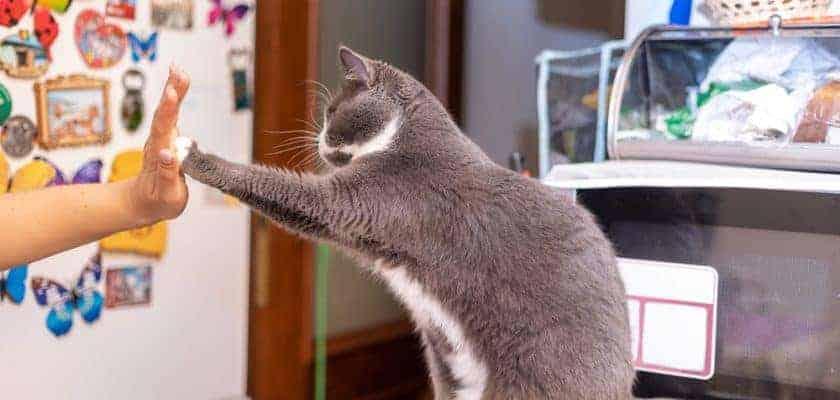 Kedilerle İletişim ve Oyun