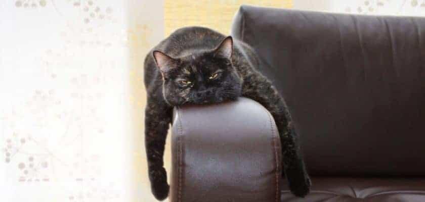 Koltukta uzanan kedi