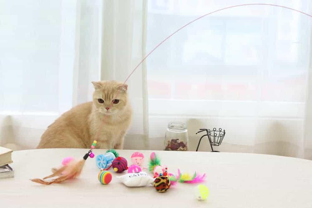 oyuncaklar ve kedi