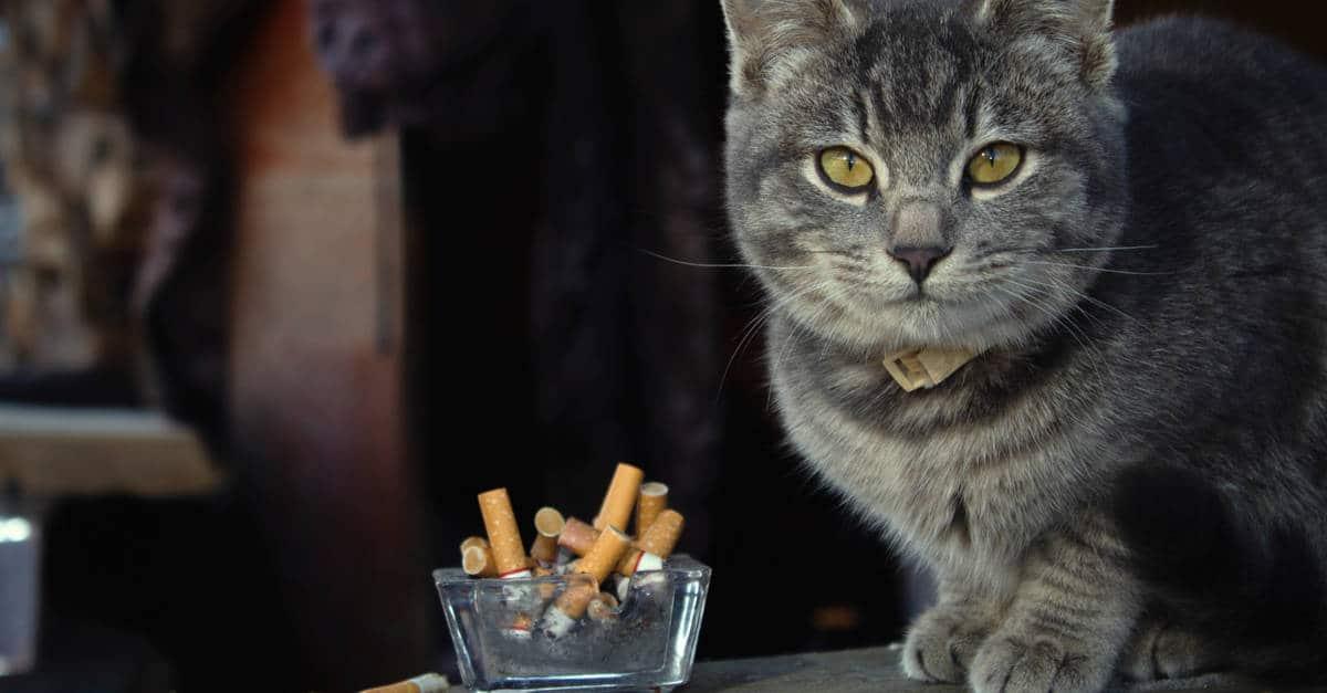 Sigara ve kedi