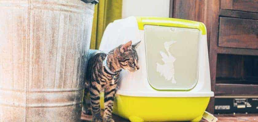 Tuvalet Kabı Dışına Kaka Yapan Kedi