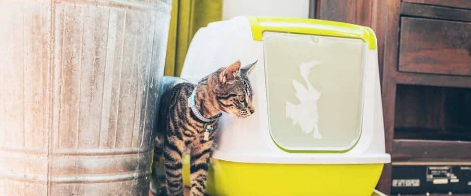 Kedinizin tuvalet kabı dışına kaka yapmasını nasıl engellersiniz?