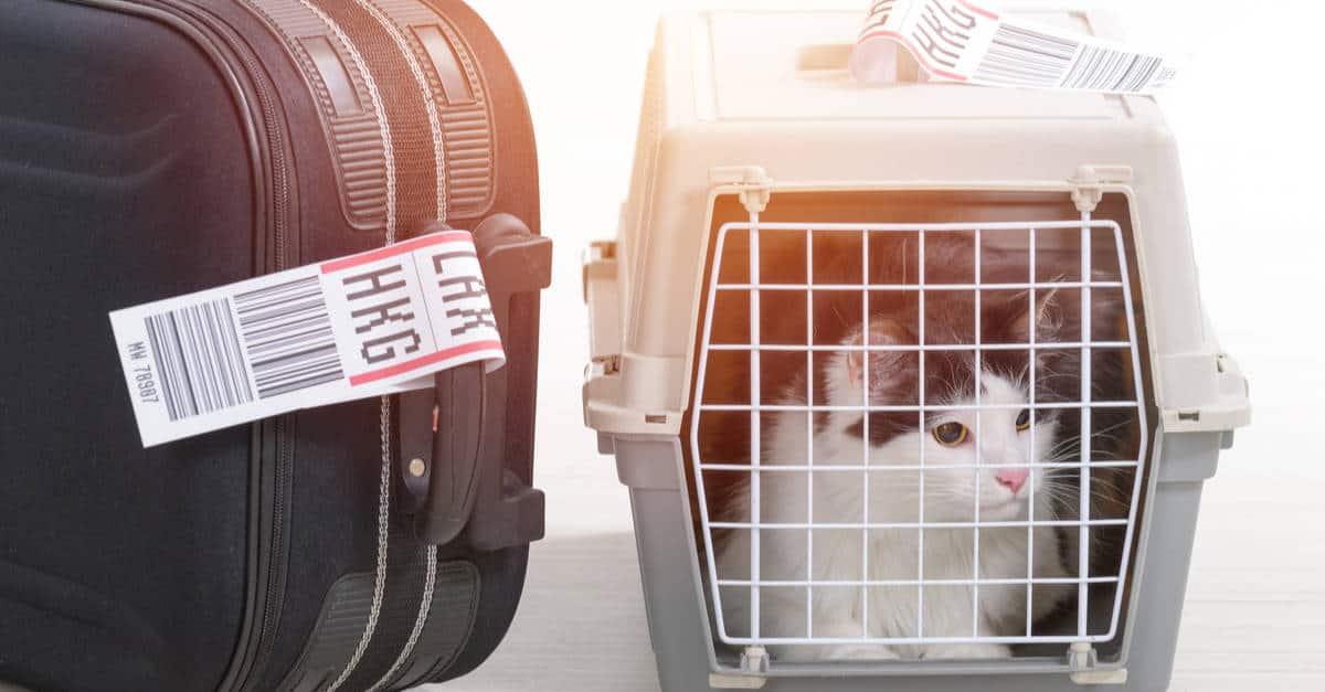Uçakla seyahat eden kedi