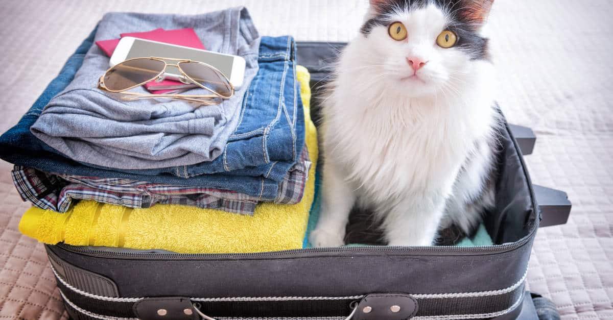 Valiz ve kedi