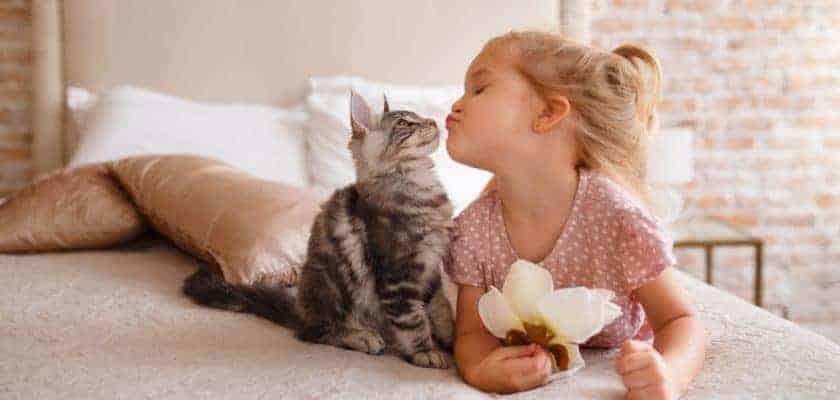 yavru kedi nasıl sevilir