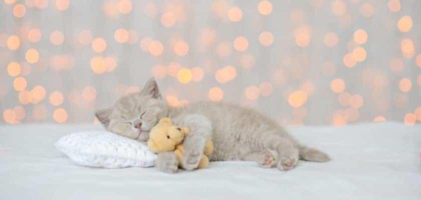 Yavru kedilerin ilk gece uykusu