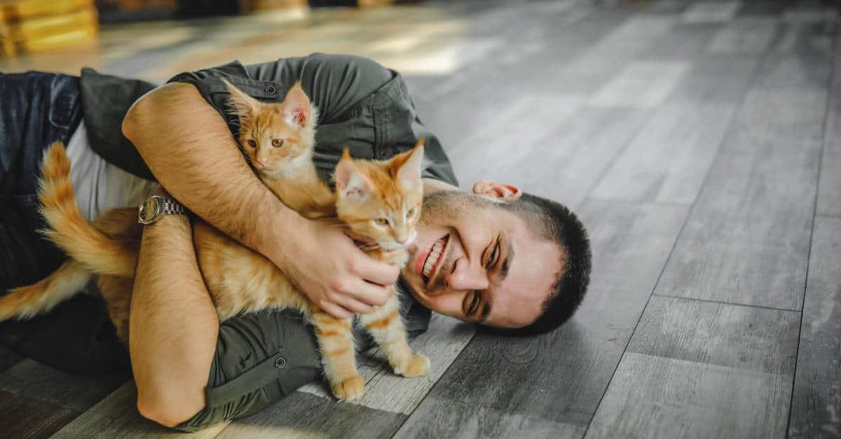 yavru kedi sevmek