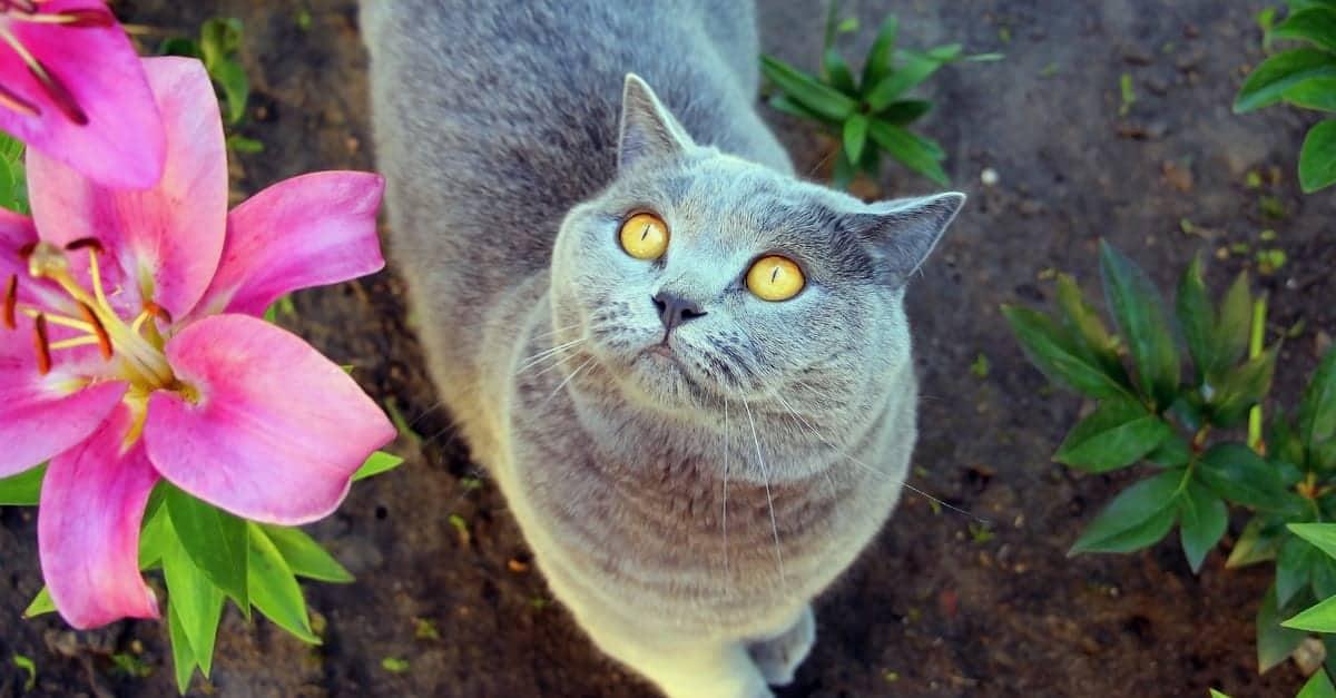 zambak ve kedi
