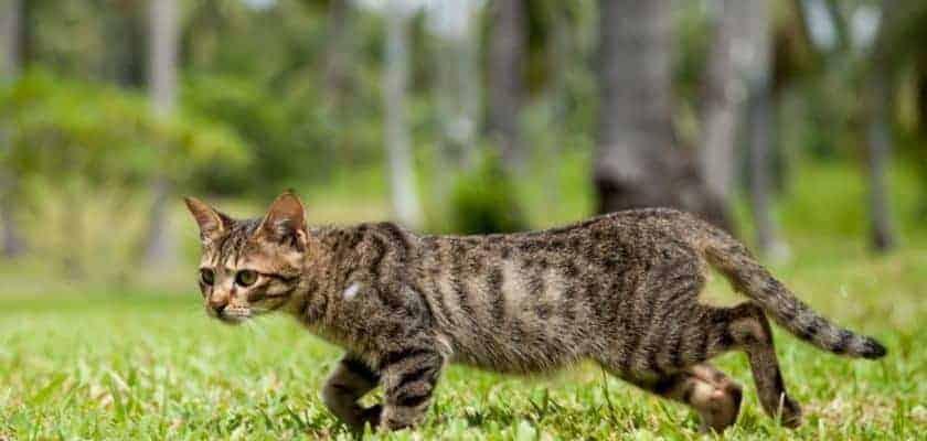 zayıf kedi