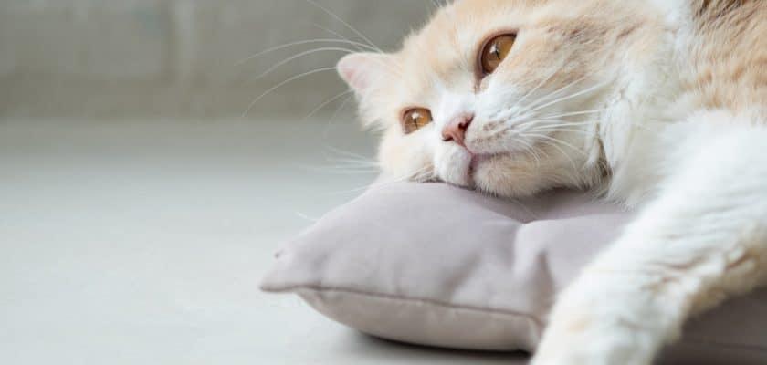Depresyonda olan kedi