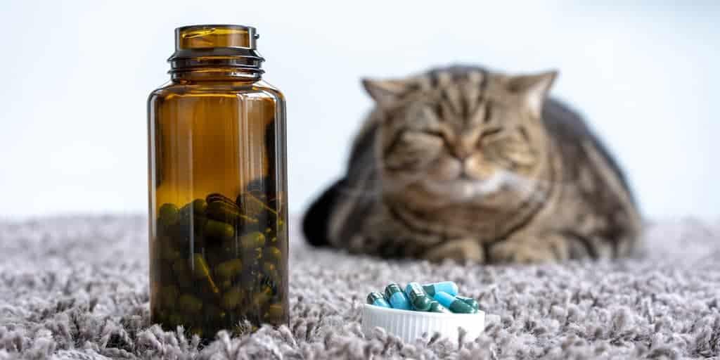 ilaç kutusu ve kedi