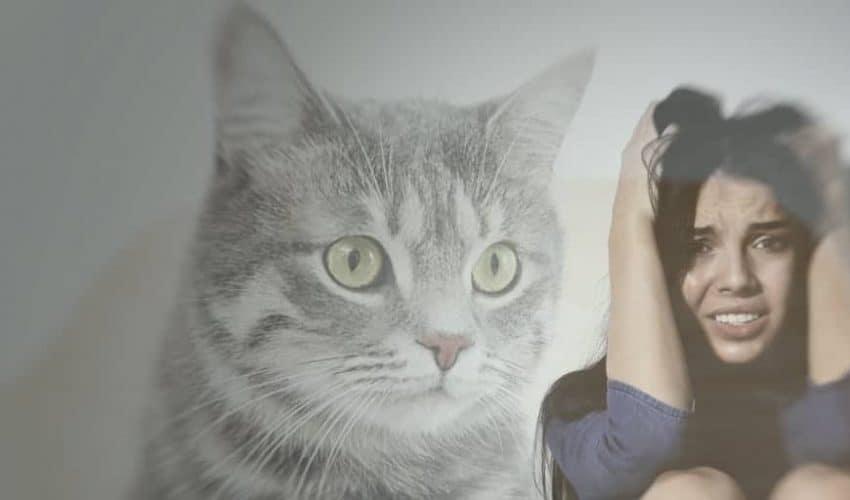 Kedi korkusu nasıl yenilir? Kedi fobisi (Ailurophobia) nedir?
