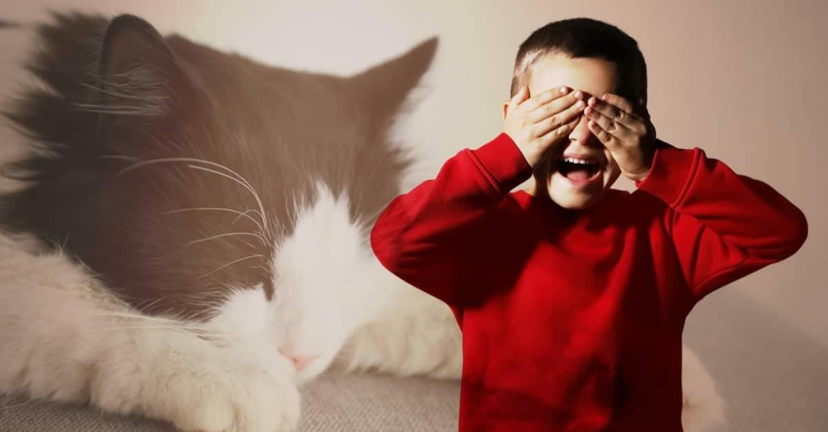 Kedi fobisi nasıl yenilir