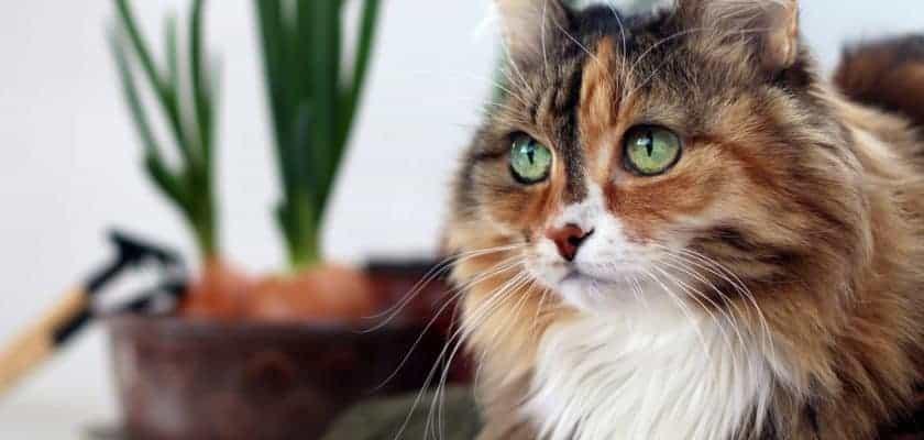 Kediler Gözleri ile Bize Neler Anlatır?