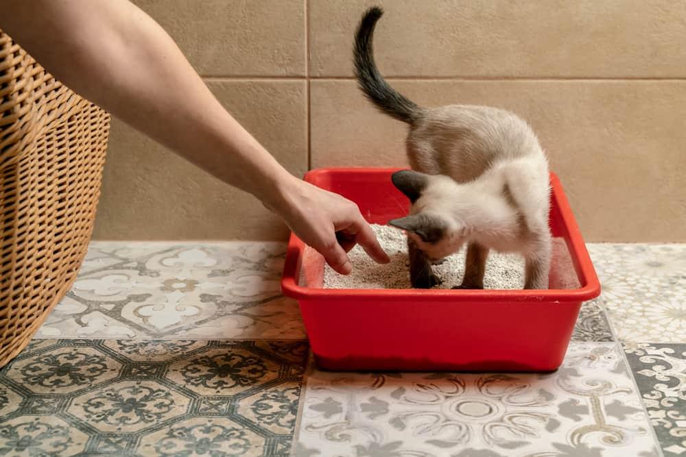 Kedilerde Tuvalet Kabı Alışkanlığı