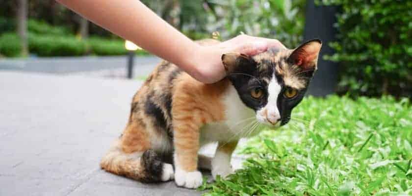 Korkak Kedilerde Özgüven Kazanma Yolları