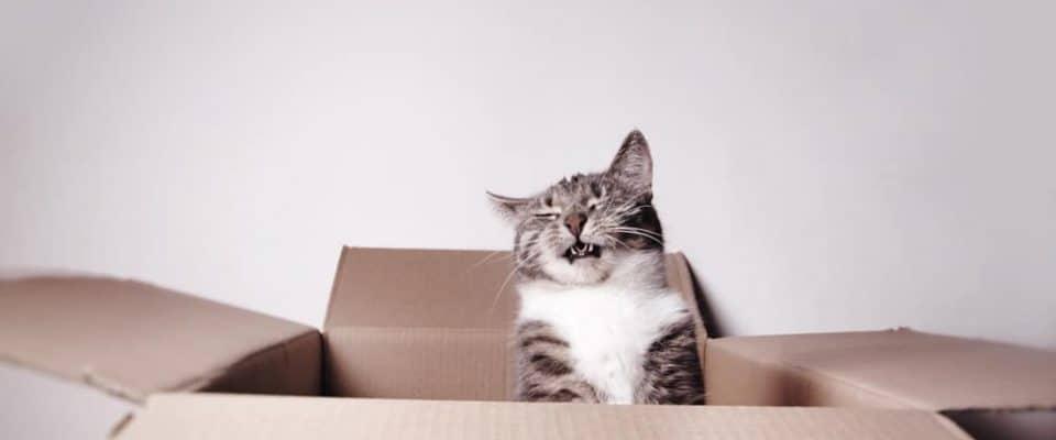Kediler neden hapşırır? En yaygın sebepleri ve tedavi yöntemleri