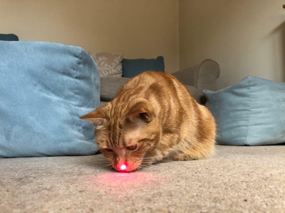Lazer Işığı Kediler İçin Zararlı mıdır?