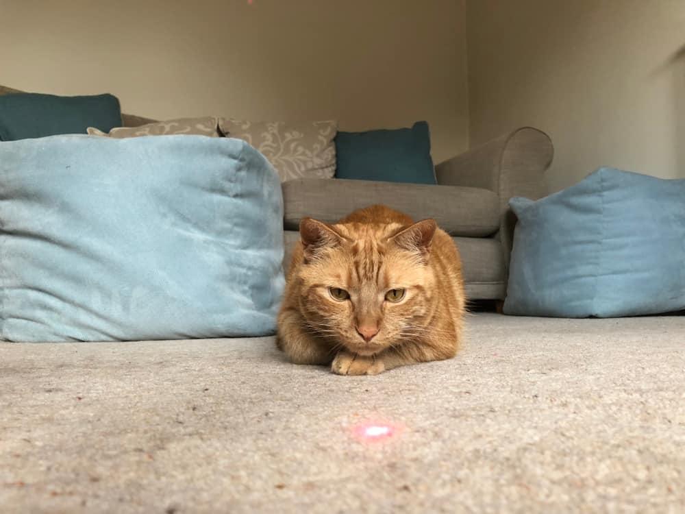 Lazer Işığını Takip Eden Kedi