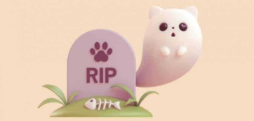 Ölümü yaklaşan kedi