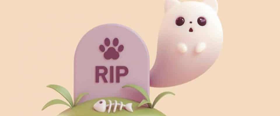 Kedilerin son günleri nasıl özel hale getirilir?
