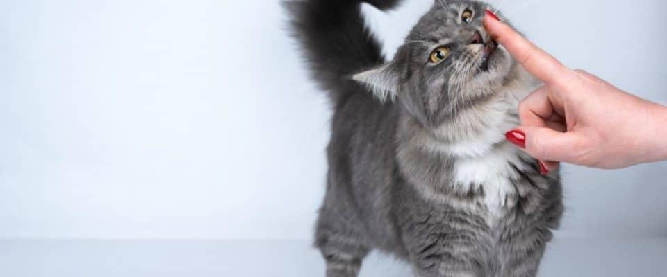 Kedi maltı nedir ve ne işe yarar?