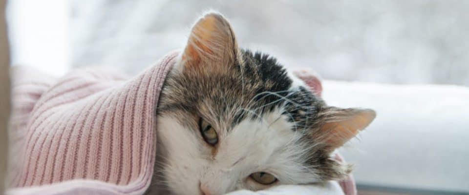 Kediniz zehirlenirse ne yapmalısınız?