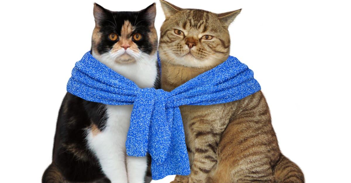 Çift kediler