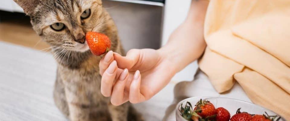 Kediler çilek yer mi? Kedilere çilek vermenin artıları ve eksileri