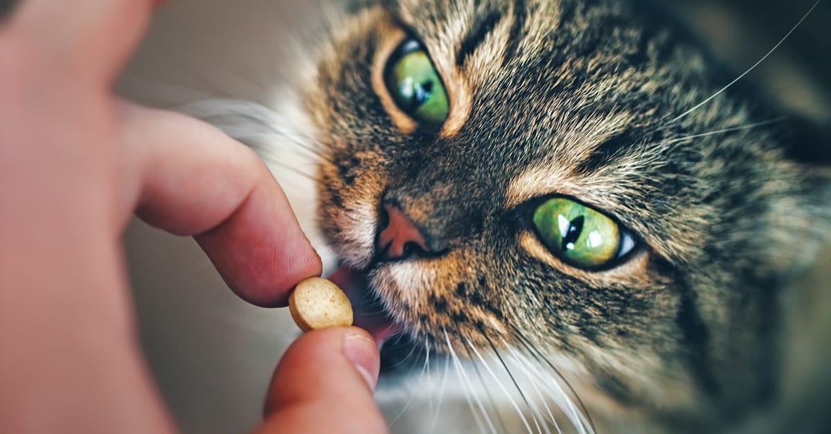 Hap içen kedi