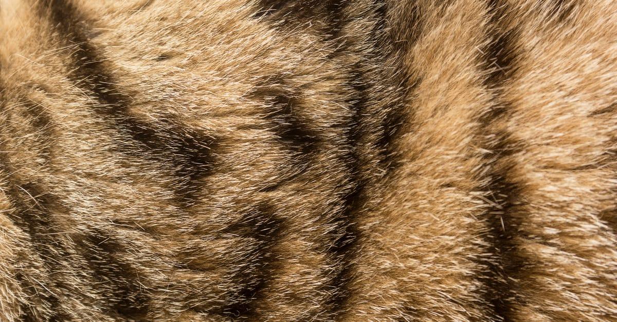 kahveli siyahlı kedi tüyü