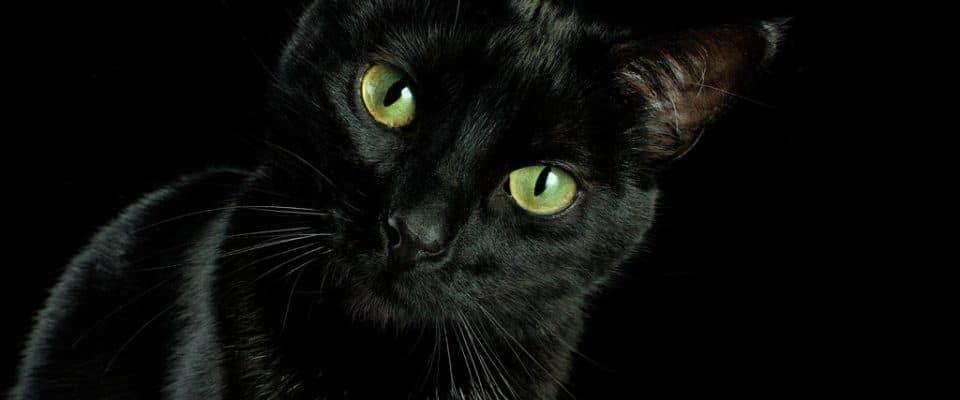 Kara kediler gerçekten kötü şans getirir mi?
