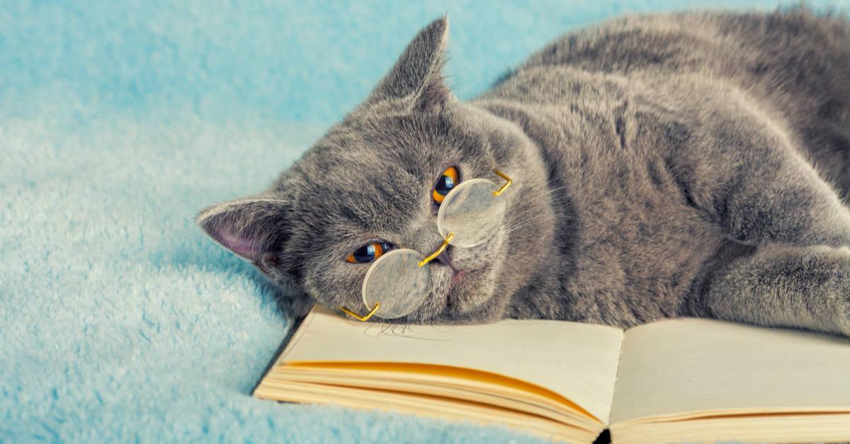 Kitaba yatan kedi