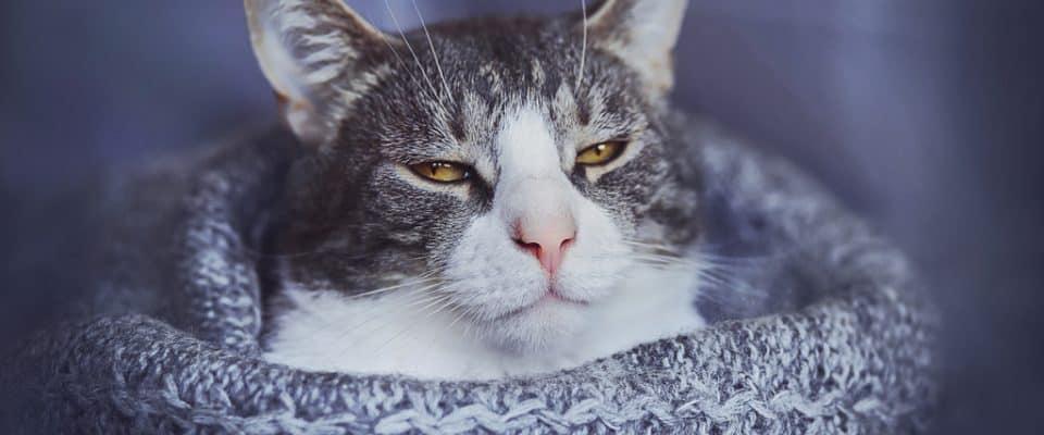 Kediler nankör müdür?