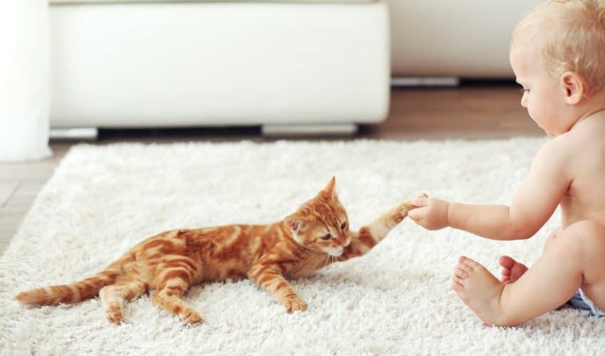 Kedinizi yeni doğacak bebeğe hazırlamak için ipuçları