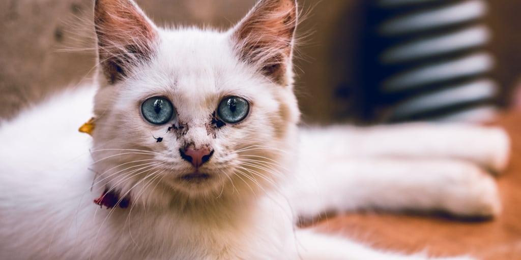 Burnu kuru kedi