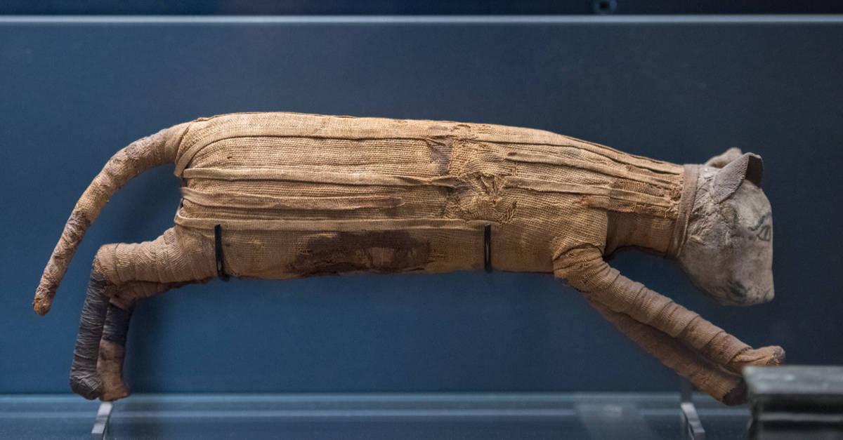 eski mısıra mumya kedi