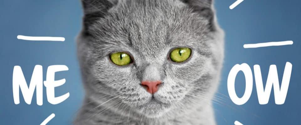 Bir kedi kaç kelime anlayabilir?