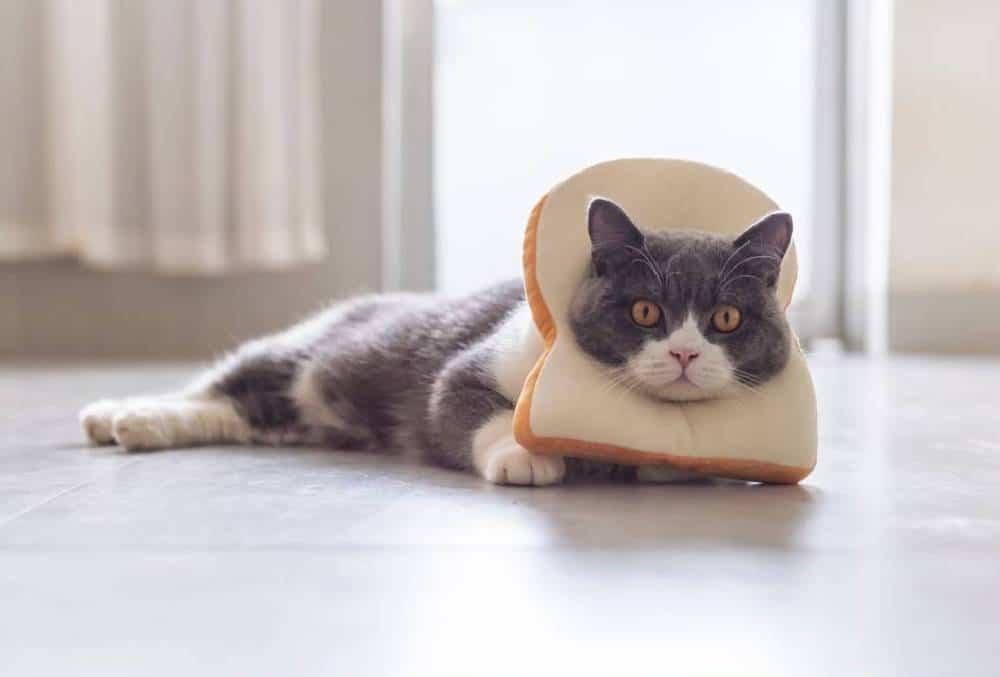 kediler ekmek yer mi