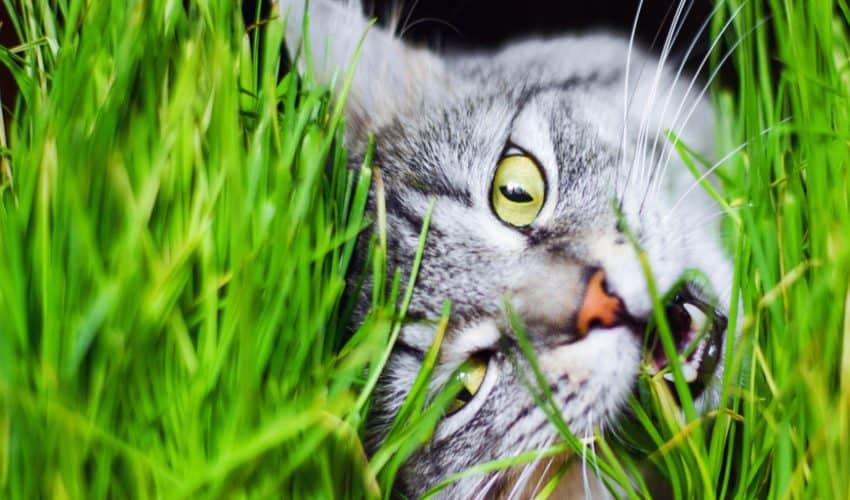 Kediler neden ot yer?