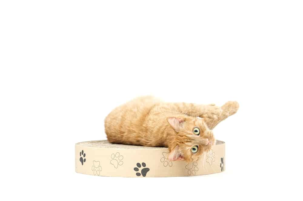 kedi tırmalama tahtası
